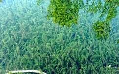 vizinövények-Plitvice