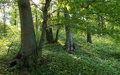 Mecseki erdő