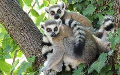 Katták a Budapesti Állatkertben