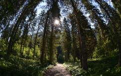 Ausztria, Krimml vízesés környéki erdőrészlet