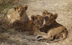 Tanzania - Serengeti nemzeti park