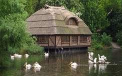 Pelikán, tópart, ház