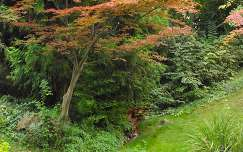 Japánkert (őszi színekben)