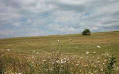 nyár mező madár gólya