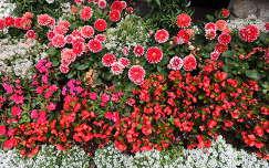 Osztrák virágoskert