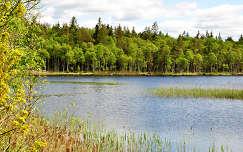 Ébredezik a természet Svédországban