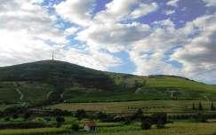 Tokaj-Hegyalja, a tokaji Kopasz-hegy fotó: Kupcsik Sarolta