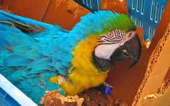 HAARLEM- HOLLAND, Macaw Parrot