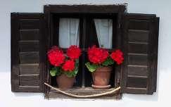 nagy piros kis barnában