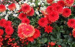 Ausztriai virágoskert