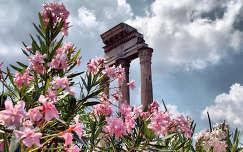 leander a Forum Romanumban,Róma,Olaszország