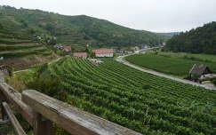 Szőlőültetvények, Senftenberg, Ausztria