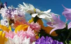 Nyári virágok
