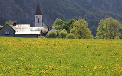 ausztria pitypang alpok virágmező templom vadvirág