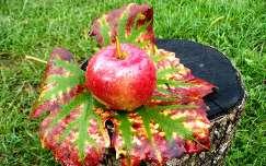 ősz levél vízcsepp alma