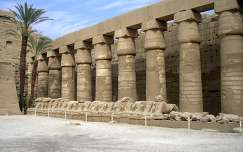 pálma egyiptom