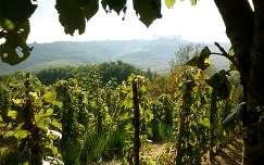 Magyarország, Zala megye, Rédics - Tenke hegy, szőlő