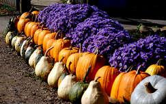 termény tök őszirózsa ősz