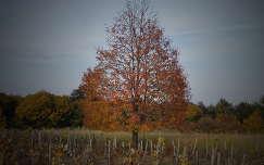 szőlőültetvény fa ősz