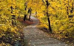 Gellért-hegy, őszi színek