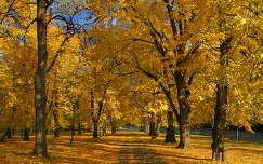 Mátrafüredi ősz