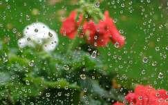 Ablakon át - esőben...