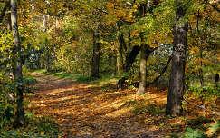 Budapest,Cinkotai parkerdő 2013.10.17. Fotó:Szolnoki Tibor