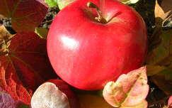 ősz gyümölcs alma