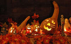 éjszakai képek tök halloween
