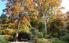 Margitszigeti ősz,Budapest