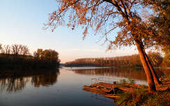 Fa a Tisza-partján