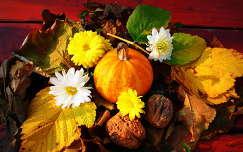 ősz levél dió csendélet gyümölcs tök