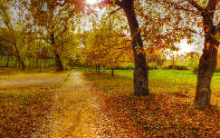 Tiszaliget sétány