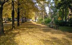 Nagyerdei sétány - Debrecen