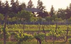 kertek és parkok szőlőültetvény