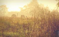 Hideg, ködös, őszi reggel,
