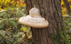 UFO az erdőben :)