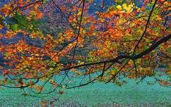 Őszi paletta