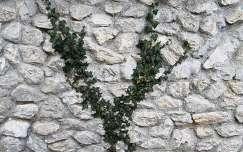 kövek és sziklák örökzöld borostyán