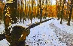 Hóban, erdőben