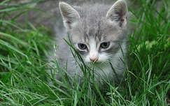 Smoky ül a fűben...