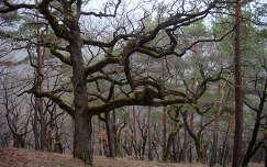 Szilvásváradi fák