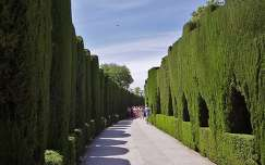GRANADA,   Alhambra. (Weg La Alhambra - Generalife)