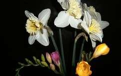 névnap és születésnap tavaszi virág nárcisz virágcsokor és dekoráció frézia