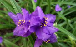 Vegyesvirág. Fotó: Csonki