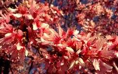 Tavasz Amerikában