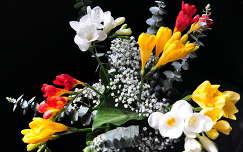 névnap és születésnap virágcsokor és dekoráció frézia