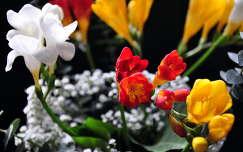 virágcsokor és dekoráció frézia
