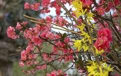 vir�gz� fa tavasz jap�nbirs aranyes�