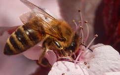 Virág, tavasz, méh